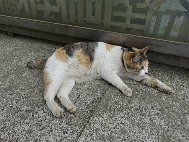 Cats of Houtong, #8275