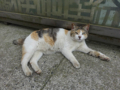 Cats of Houtong, #8277