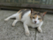 Cats of Houtong, #8279