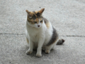 Cats of Houtong, #8280