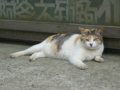 Cats of Houtong, #8283