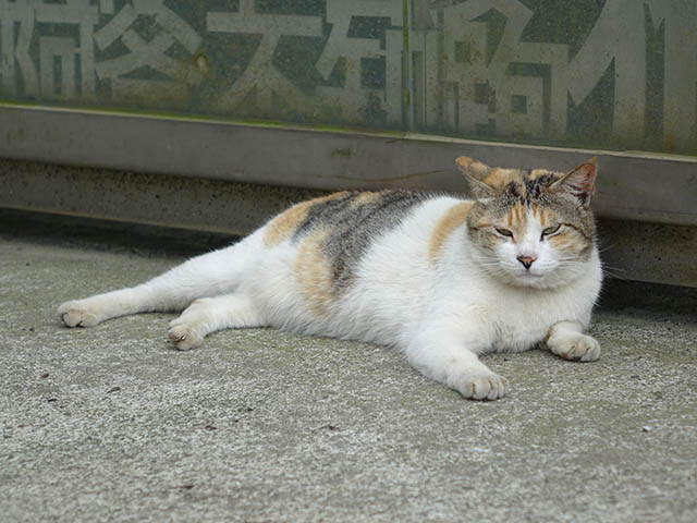 Cats of Houtong, #8284