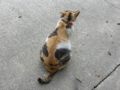 Cats of Houtong, #8285