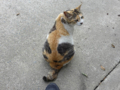 Cats of Houtong, #8286