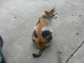 Cats of Houtong, #8287