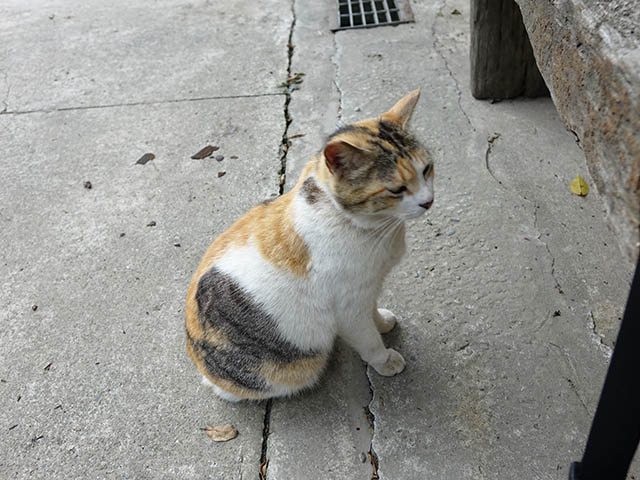 Cats of Houtong, #8288
