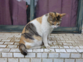 Cats of Houtong, #8297