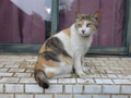 Cats of Houtong, #8298