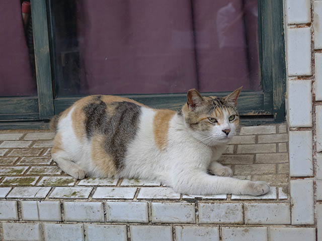 Cats of Houtong, #8299