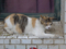 Cats of Houtong, #8300