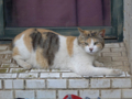 Cats of Houtong, #8301