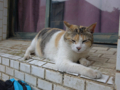 Cats of Houtong, #8302
