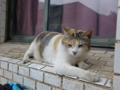 Cats of Houtong, #8303