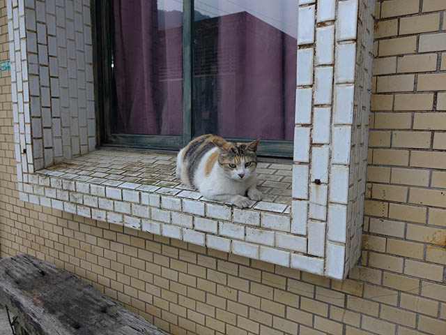 Cats of Houtong, #8304