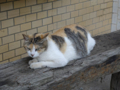 Cats of Houtong, #8305