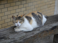 Cats of Houtong, #8306