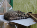 Cats of Houtong, #8309