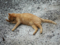 Cats of Houtong, #8312