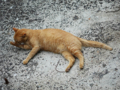 Cats of Houtong, #8313