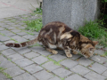 Cats of Houtong, #8316