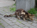 Cats of Houtong, #8317