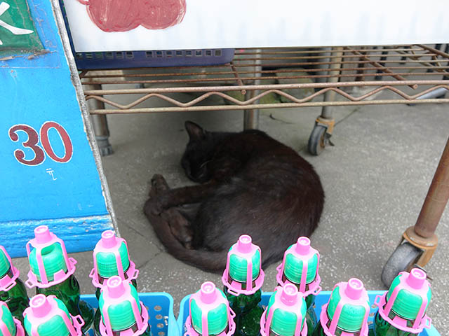 Cats of Houtong, #8318