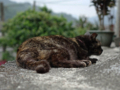 Cats of Houtong, #8319