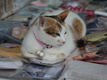Cats of Houtong, #8325
