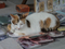 Cats of Houtong, #8327
