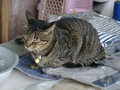 Cats of Houtong, #8328
