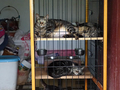 Cats of Houtong, #8330