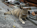 Cats of Houtong, #8354