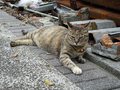 Cats of Houtong, #8355