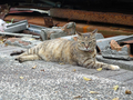 Cats of Houtong, #8359