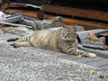 Cats of Houtong, #8360