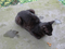 Cats of Houtong, #8385