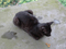 Cats of Houtong, #8386