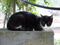 Cats of Houtong, #8391