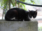 Cats of Houtong, #8392