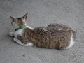 Cats of Houtong, #8396