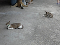 Cats of Houtong, #8399
