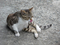 Cats of Houtong, #8403