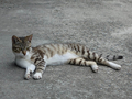 Cats of Houtong, #8405