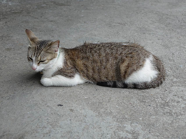 Cats of Houtong, #8408
