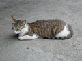 Cats of Houtong, #8409