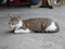 Cats of Houtong, #8410