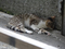 Cats of Houtong, #8414