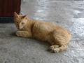 Cats of Houtong, #8449