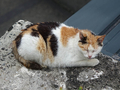Cats of Houtong, #8453
