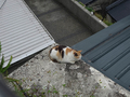 Cats of Houtong, #8458